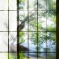 日本の宮【桂離宮見学】