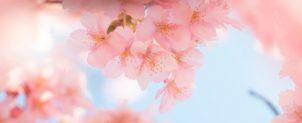 4月 日本の句【春の吟行】