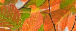 10月 日本の句【秋の吟行】